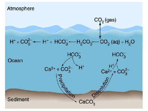 chemosynthesis in the ocean Chemosynthesis and hydrothermal vent life introduction just a few decades ago, submersibles and remote sensing technologies allowed scientists to visit the farthest.