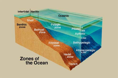 fiu ocb3043 lecture notes On ocean floor zones