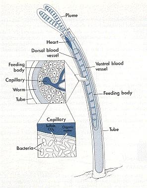 usgs chemosynthesis